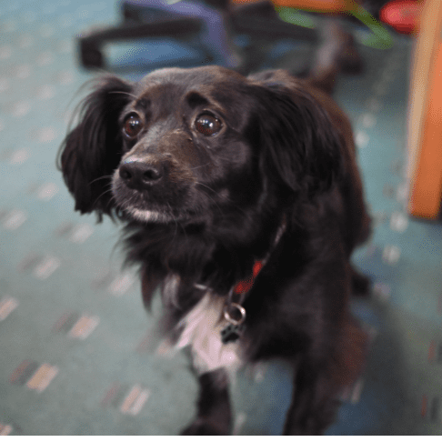 Munchie the Office Dog